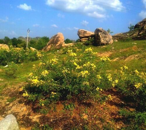 medicinal-plants-rajasthan-botanical-garden