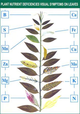 plant-nutrient-deficiency-symptoms