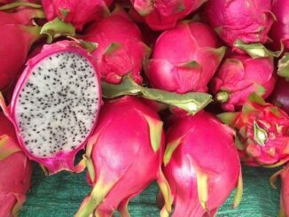 dragon-fruit-to-kamalam
