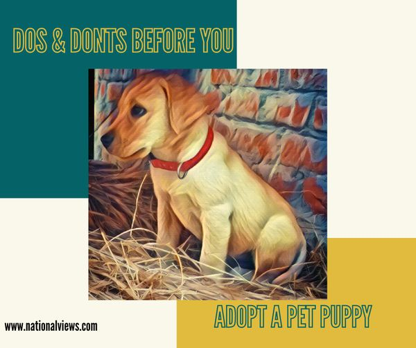 before you adopt a pet puppy - dos and don'ts